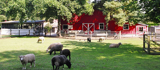 Maplewood Petting Farms